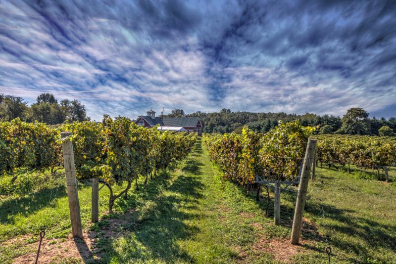 Virginia Vineyard Month – Earth Day Weekend