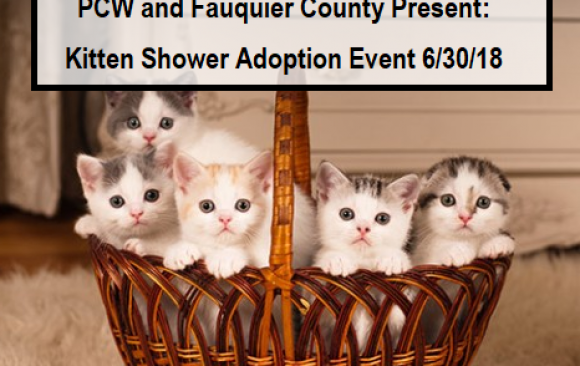 Saturday, June 30th: Kitten Shower with Fauquier SPCA