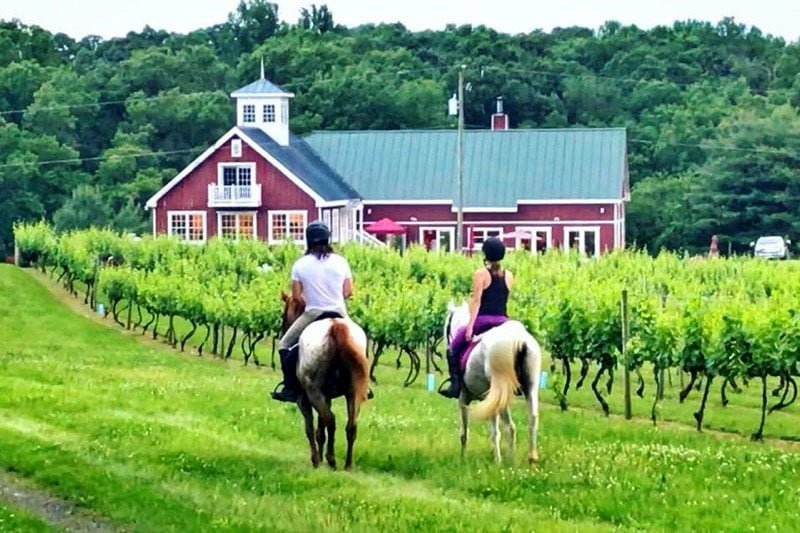 Philip Carter Winery Bright Morning Horseback wine country horse rides