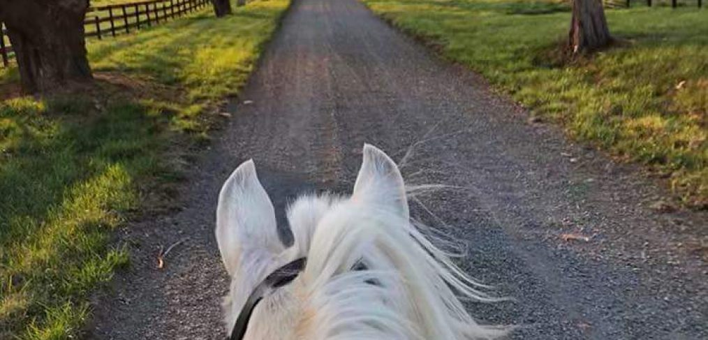 Philip Carter Winery Solaris Stables and Yoga wine country horse rides